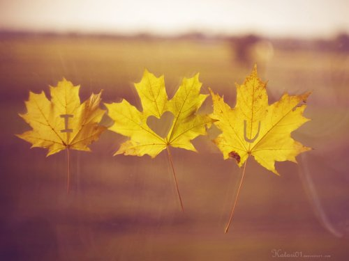 i_love_you_autumn__by_katari01-d4ceflv